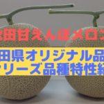 【秋田甘えんぼメロン】Rシリーズ品種特性紹介【秋田県オリジナル品種】