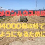 【ハウス増築】年間4000個収穫できるようになるために【メロン栽培】
